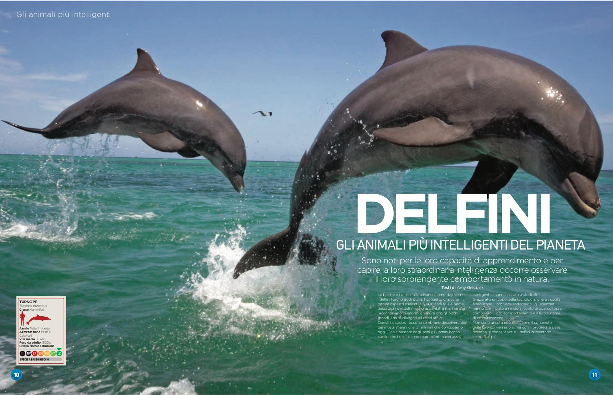Nature_and_animals_delfini_dolphin.png