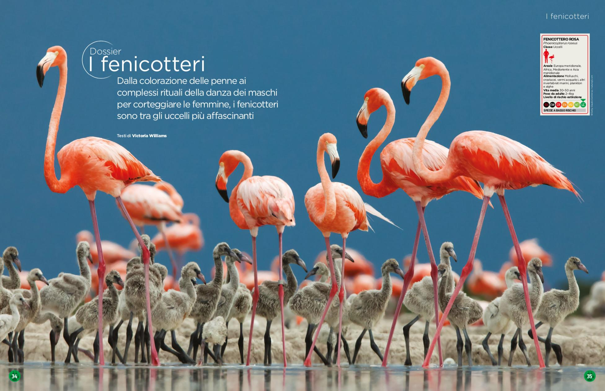 Nature_and_animals_fenicotteri_fenicottero.png