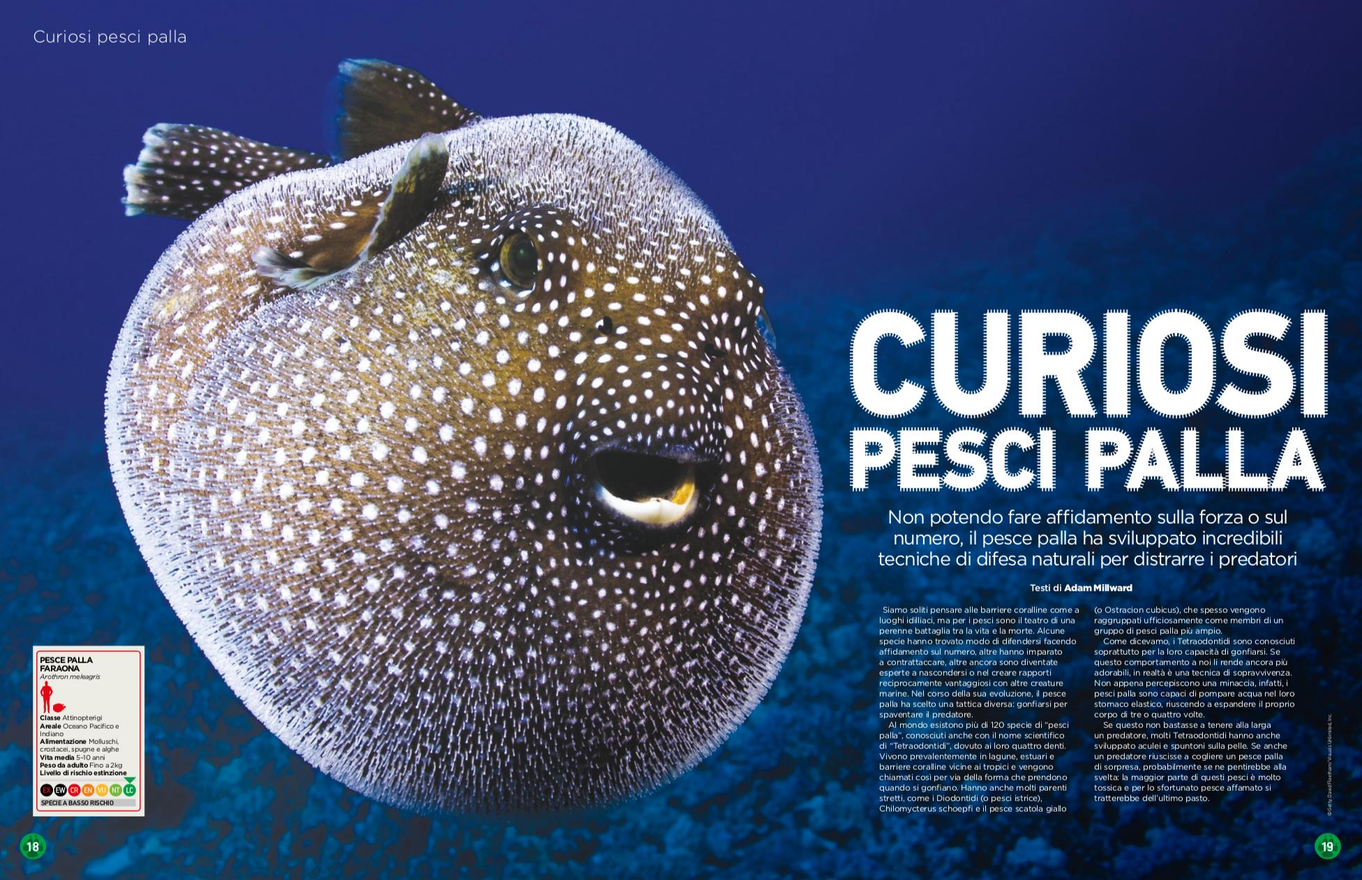 Nature_and_animals_pesce_palla.png