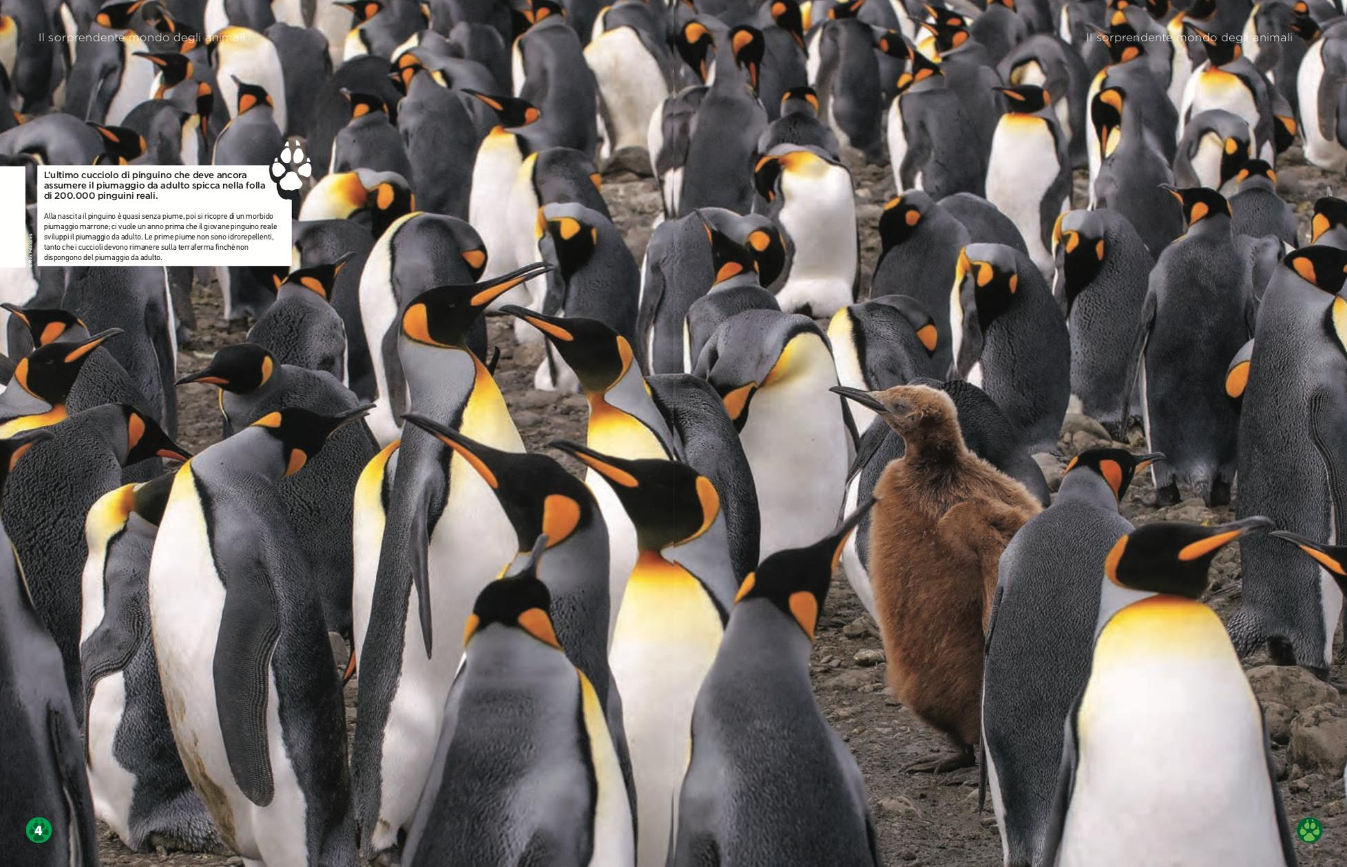 Nature_and_animals_pinguini.png
